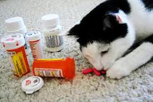 Как лечить кота при отравлении в домашних условиях