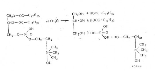 фосфорная кислота и холин.