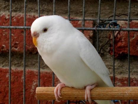 фото белых поп